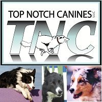 Top Notch Canines