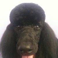doggy doo clippery