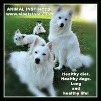 Animal Instincts Pet Store