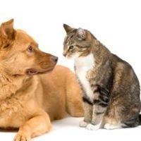 Allegan Veterinary Clinic