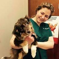 Ready to Go Veterinary Rehabilitation
