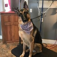 Lilly's Pet Grooming LLC