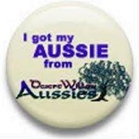 Desert Willow Aussies