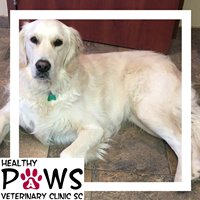 Healthy Paws Veterinary Clinic