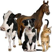 Carpenter Veterinary Clinic