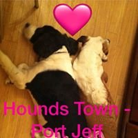 Hounds Town - Port Jeff