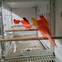 Bruno's Birds