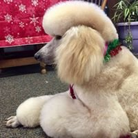 Karen , The Dog Groomer