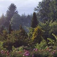 Brooks Gardens Peonies