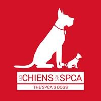 Chiens SPCA Montreal Dogs