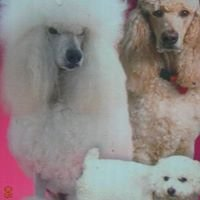 Diva Dogs Grooming Salon & Spa