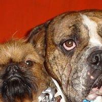 BiscuitMagoo Dog Spa