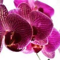 """A Street Florist  """"Best Florist in Hayward"""""""