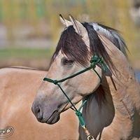 Windy Ridge Spanish Mustangs