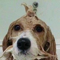 Li'l Nell's Pet Salon and Doggy Daycare