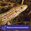 Rijk van Nijmegen - Natuurmonumenten