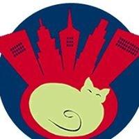 City Kitty Veterinary Care for Cats
