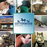 Cottonwood Animal Clinic L.L.C.