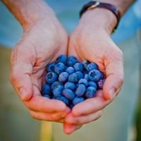Blueberry Fields of Stillwater