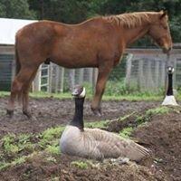 GEVA, inc. Equine Retirement Foundation