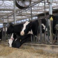 Penn Vet Marshak Dairy