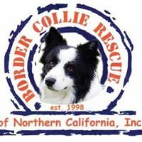 Border Collie Rescue of Northern California