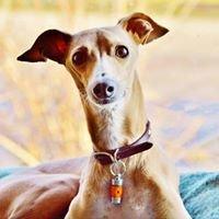 Pet Diffuser Aromatherapy Pendants