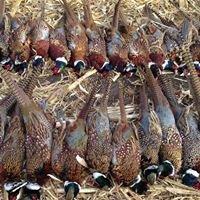 Smokin' Barrels Pheasant Hunts & Lodge