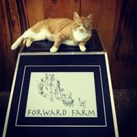 Forward Farm LLC