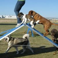 Lucky Dog Boarding & Training Center, LLC.