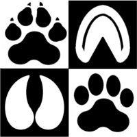 Chetek Veterinary Clinic