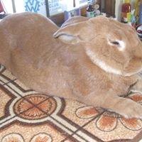 Henrys Rabbit Ranch