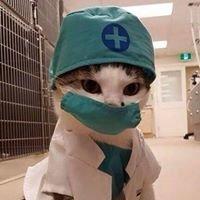 Fairview Drive Pet Hospital