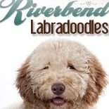 Riverbend Labradoodles