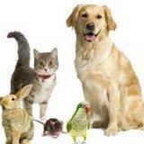 Riverside Park Veterinary Clinic