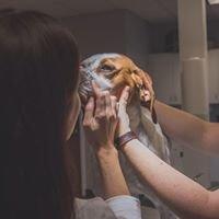 Bliss Animal Eye Care, Inc.