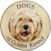 Dogs of Golden Kennel - Doubledoodle, Labradoodle, Goldendoodle