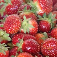 Nelson's Berries