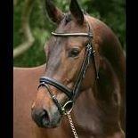 North River Equestrian LLC