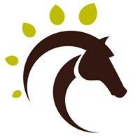 Horses & Pathfinders