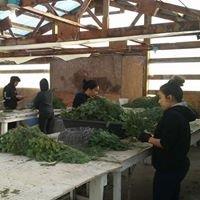Hacker's Tree Farm Nursery & Greenhouse
