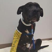 J & Co Dog Rescue