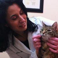 Downtown Toronto  Cat Clinic