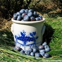 Pine Winder Blueberries