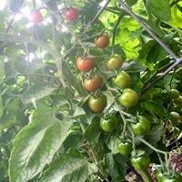 Fertile Vineyard and Vegetables