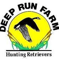 Deep Run Farm Hunting Retrievers
