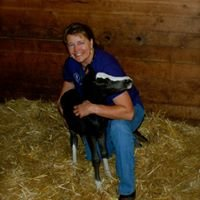 Equine Veterinary Services, Tresa Apke, DVM