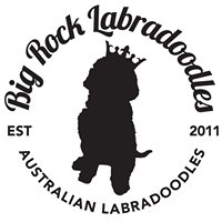 Big Rock Labradoodles
