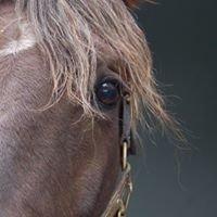 Corriente Veterinary Service