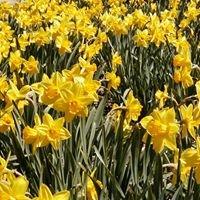 New Jersey Botanical Garden/Skylands Association